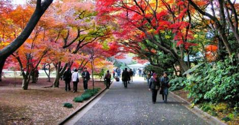 Foliage al Shinjuku Gyoen Garden di Tokyo (foto Mrmya da Flickr.com)